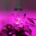 LED Plant Grow Light 30W - 50W - 80W Full Spectrum Hydroponic |