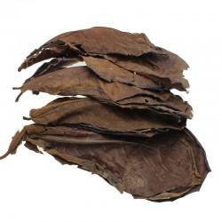 10pcs high quality natural terminalia catappa leaves - indian almond lour tree olive leaf
