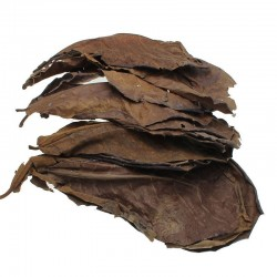 Natural terminalia leaves for aquarium water balance 10 pieces